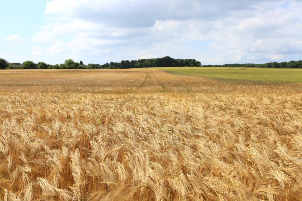 Cereali e grani